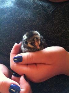 chicksday1