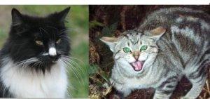 final-feral-cat-LTshears-Yanjing-Lu-CC-smaller