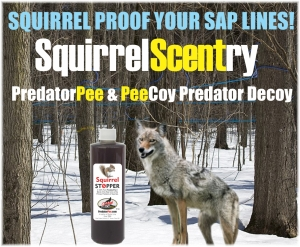 Sap-line-SquirrelScentry-banner